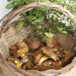 wilde groenten, wellness en gezond eten op sardinie